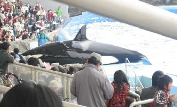 名古屋港水族館~シャチのクーちゃん~_e0095418_10552722.jpg