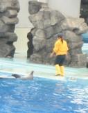 名古屋港水族館~シャチのクーちゃん~_e0095418_10574588.jpg