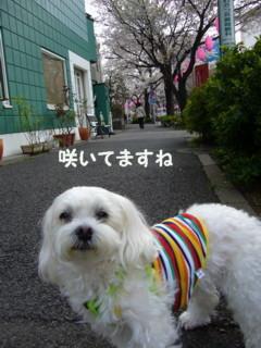 f0005727_1633487.jpg