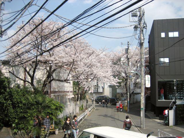 桜_d0075828_19115191.jpg