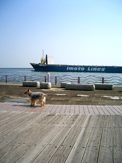 タンカーが海をゆったりと進み、その進行方向に合わせる様に、ワンコが横を向いている写真。その横顔の目線の先にはお気に入りのカフェの建物が写っています。