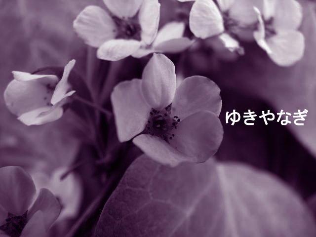 f0099535_134207.jpg
