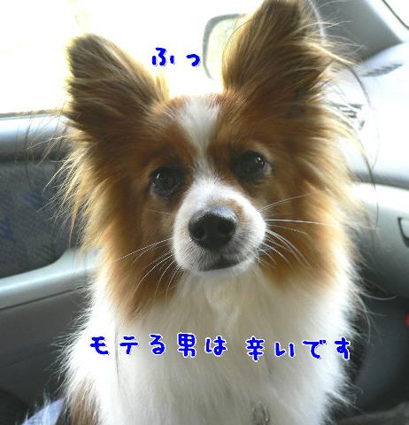 d0013149_10403425.jpg