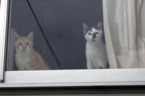窓際の小町・小太郎_d0084952_20463370.jpg