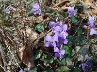 里山の春_c0108460_163335.jpg