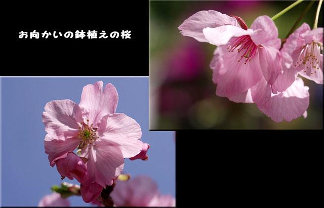 f0104569_23421924.jpg