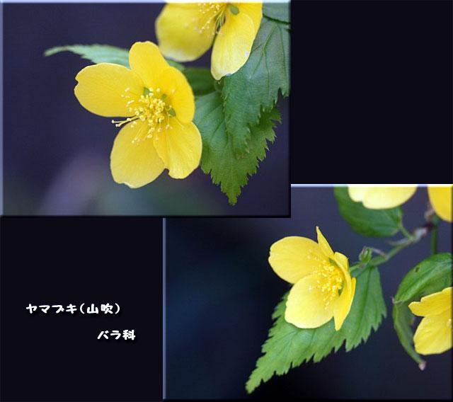 f0104569_23423398.jpg