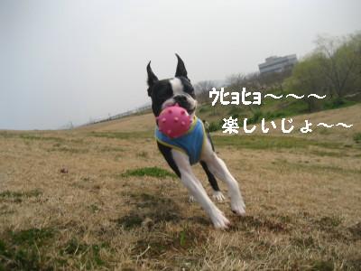 c0092787_948887.jpg