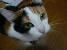 f0120698_13673.jpg