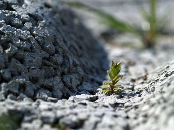 岩場の高山植物ではないが、、、その4_a0037907_21564529.jpg