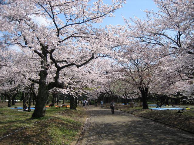 桜その2_d0075828_15215020.jpg