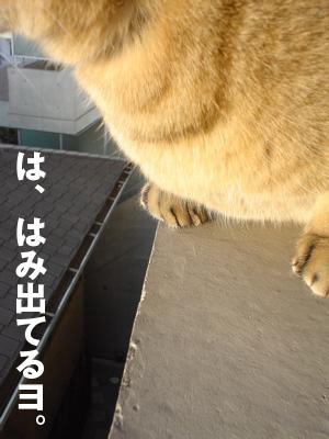 b0080632_5151019.jpg