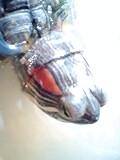 d0048632_17243113.jpg