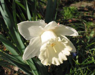 庭に咲いてる花!_e0098241_11162481.jpg