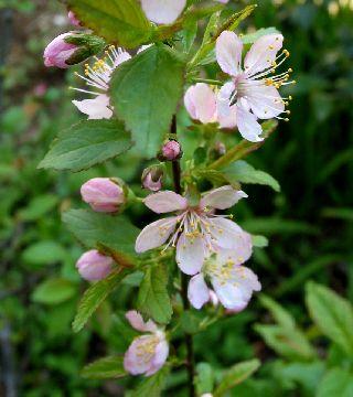 庭に咲いてる花!_e0098241_11174342.jpg