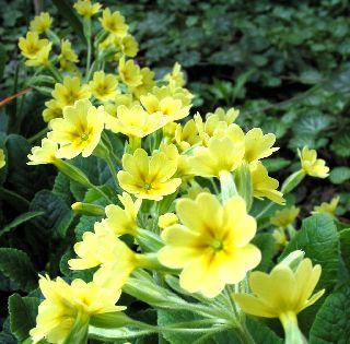 庭に咲いてる花!_e0098241_1118322.jpg