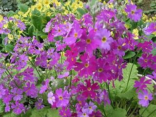 庭に咲いてる花!_e0098241_1140960.jpg