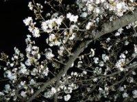 新府の桃は間もなく開花宣言?_f0019247_0201774.jpg