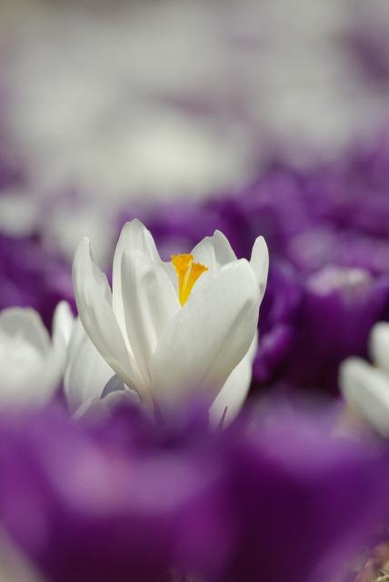 ハイジの村で花を撮る2_e0063851_23471996.jpg