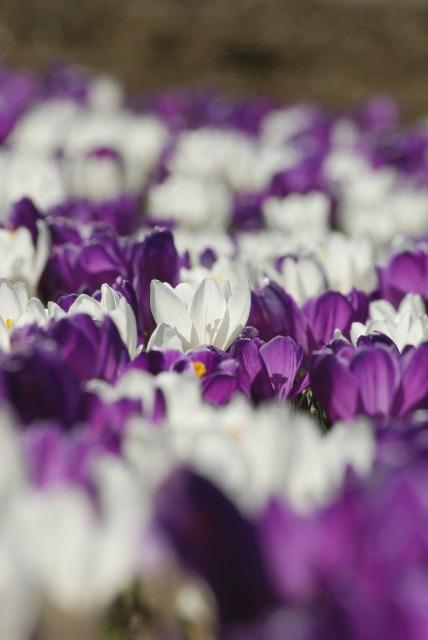 ハイジの村で花を撮る2_e0063851_2347454.jpg