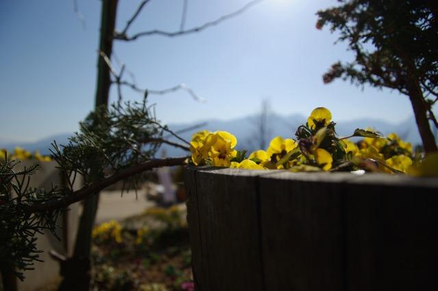 ハイジの村で花を撮る2_e0063851_23483419.jpg