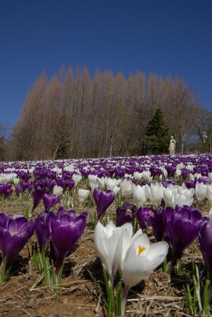 ハイジの村で花を撮る2_e0063851_234878.jpg