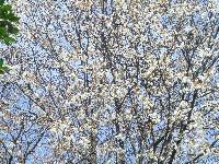 みさき里山クラブ「お花見懇親会」_c0108460_22504066.jpg