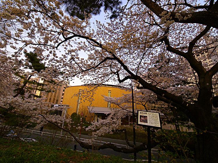 こぞ今宵 命限りに 桜花 ✿ฺ´☆`✿ฺ_a0031363_2304448.jpg