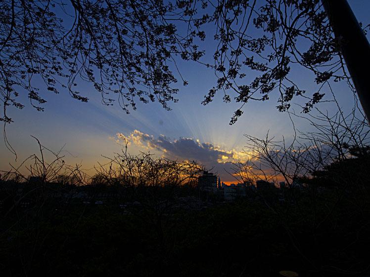 こぞ今宵 命限りに 桜花 ✿ฺ´☆`✿ฺ_a0031363_2313525.jpg