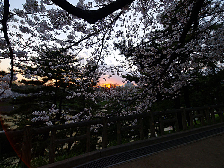雨に耐え 命燃やすや 桜花 ✿ฺ´☆`✿ฺ_a0031363_2345387.jpg