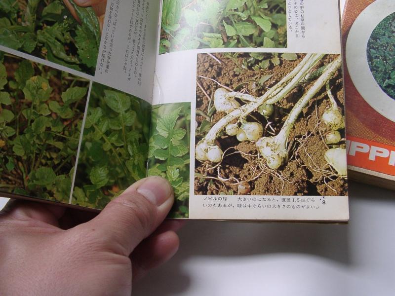 食べられる野草を採った思い出_a0074069_10383277.jpg