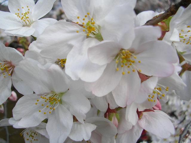春宵一刻 : ぶらり~ドラマウォッチング~