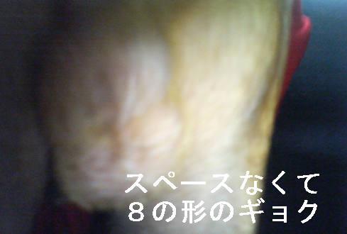 f0123589_12511749.jpg