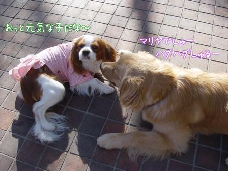 小型犬と大型犬のバトル?_f0064906_18225511.jpg