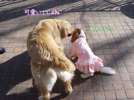 小型犬と大型犬のバトル?_f0064906_1823367.jpg