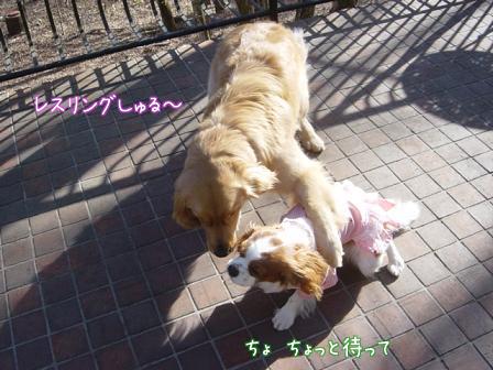 小型犬と大型犬のバトル?_f0064906_18242470.jpg