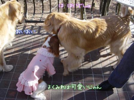 小型犬と大型犬のバトル?_f0064906_18251967.jpg
