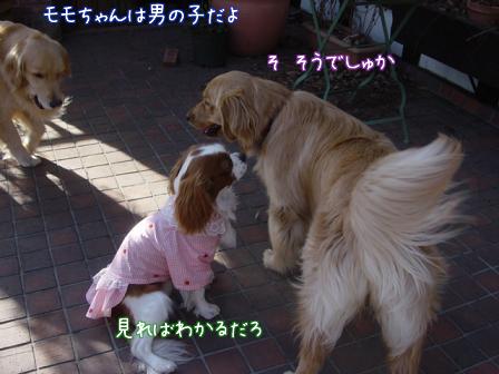小型犬と大型犬のバトル?_f0064906_1825483.jpg