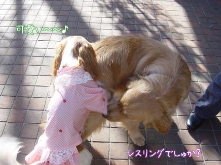 小型犬と大型犬のバトル?_f0064906_1828189.jpg
