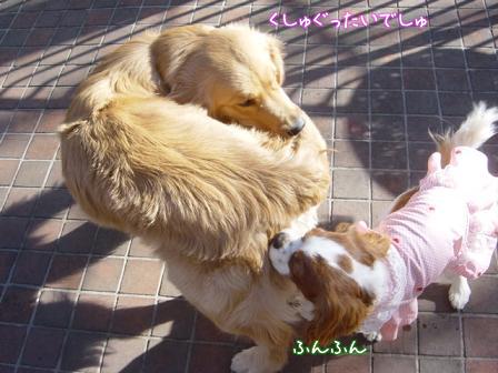 小型犬と大型犬のバトル?_f0064906_1828225.jpg