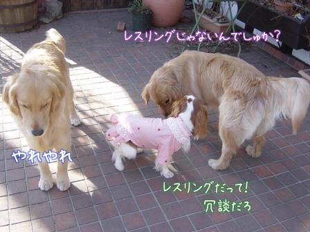 小型犬と大型犬のバトル?_f0064906_1828344.jpg
