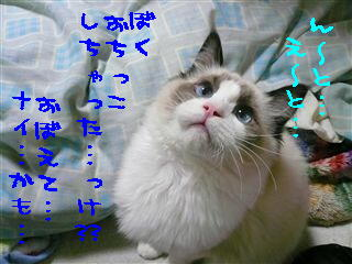 c0115211_21132535.jpg