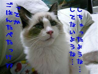 c0115211_23252082.jpg