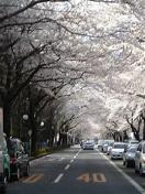 桜♪_c0060412_17192483.jpg