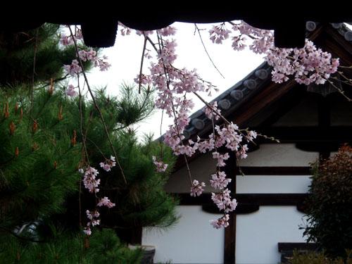 京都 知恩院_e0048413_14553251.jpg