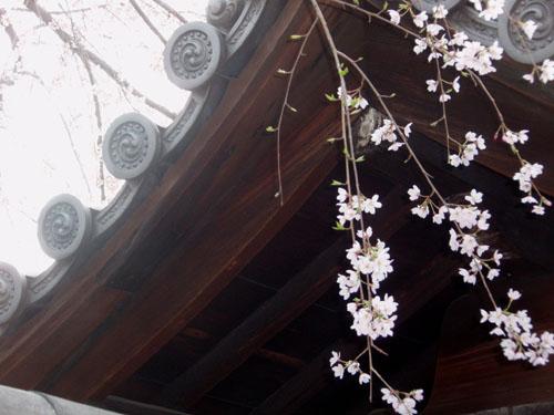 京都 知恩院_e0048413_14554630.jpg