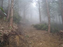 三井協働の森今年の活動予定_e0002820_22272085.jpg