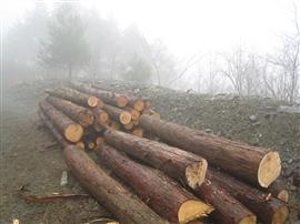 三井協働の森今年の活動予定_e0002820_22335913.jpg