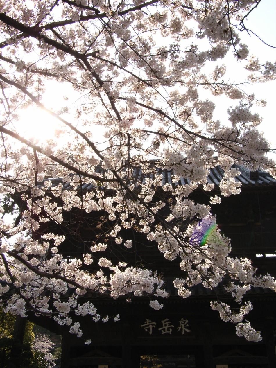 花のごとく散りにけり_d0091021_0564451.jpg