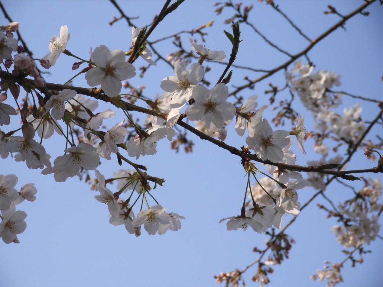 花のごとく散りにけり_d0091021_105585.jpg